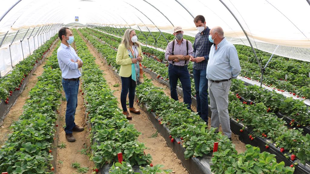 El Ayuntamiento destaca la apuesta por la innovación y el desarrollo sostenible de las empresas agrícolas de la localidad